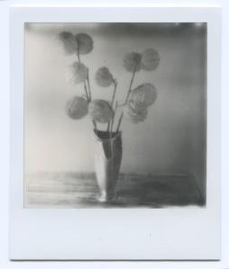 Pod flowers 2