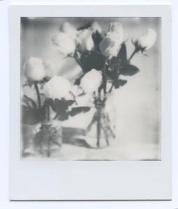 Roses in Mason Jars