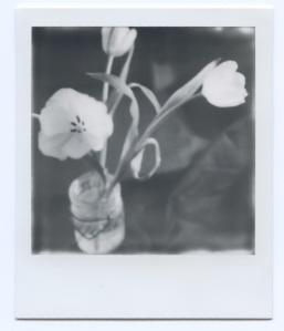 Tulips 3 in Jar