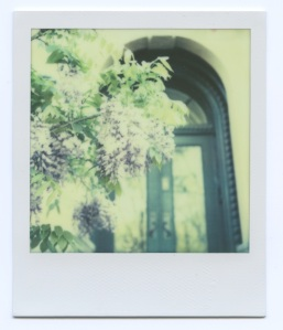 Wysteria and door