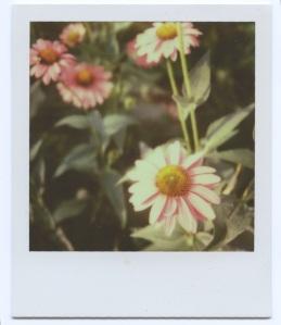High Line Flowers 1