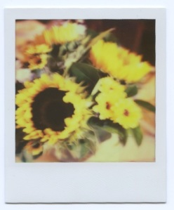 Sunflowers for Carol