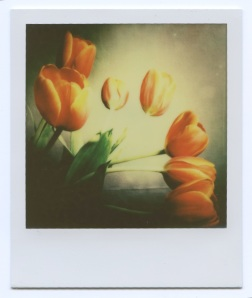 Tulips Day 2