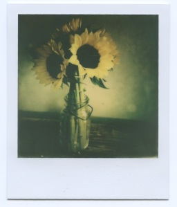 Sunflowers for th 11th