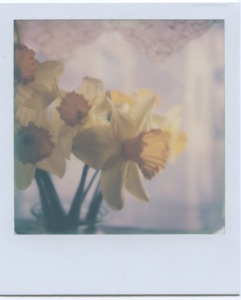 Daffodils by lace 2